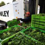 Перевозка зелени в рефрижераторе