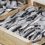 Подготовка рыбы к перевозке автомобильным транспортом
